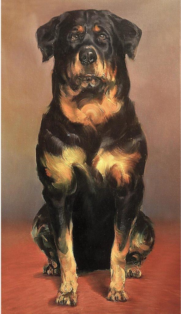 Estudio de perro II