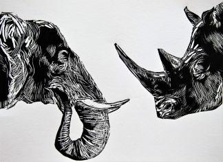 Elefante y Rinoceronte