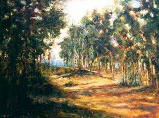 Un paseo en el bosque